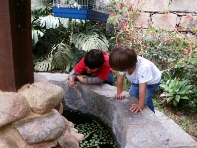 Mateus ensinando ao Davi que existem plantas que vivem na água.